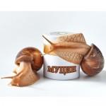 Экстракт муцина улитки – Snail collection в косметологии